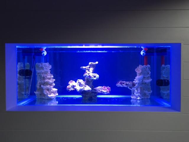 Nouvelle Maison / Nouveau projet : Alexpilon's reef tank 3 - Page 3 Img_0812