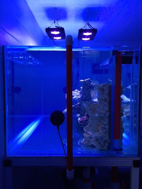 Nouvelle Maison / Nouveau projet : Alexpilon's reef tank 3 - Page 3 Img_0813