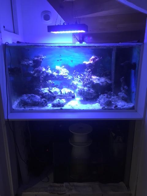 Le nouveau Reef d'Alexpilon, 600l custom - Page 38 Img_1210
