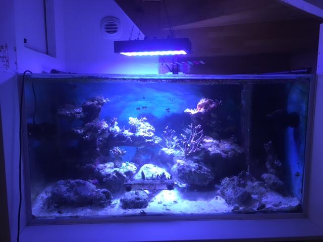 Le nouveau Reef d'Alexpilon, 600l custom - Page 38 Img_1211
