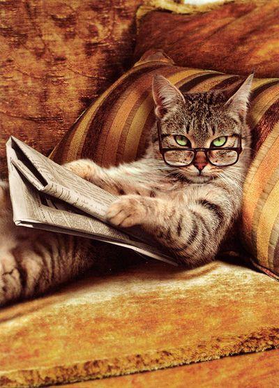 Les chats - Page 22 C8e24410