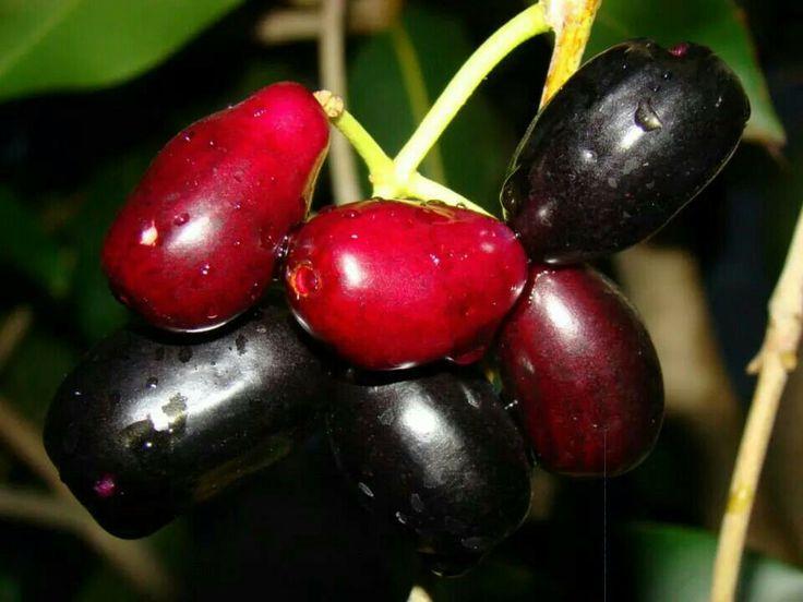 Fleurs,....fruit,.....tout ce qui se mange,...se boit....ou qui vient de la nature.......... - Page 6 Jambol10