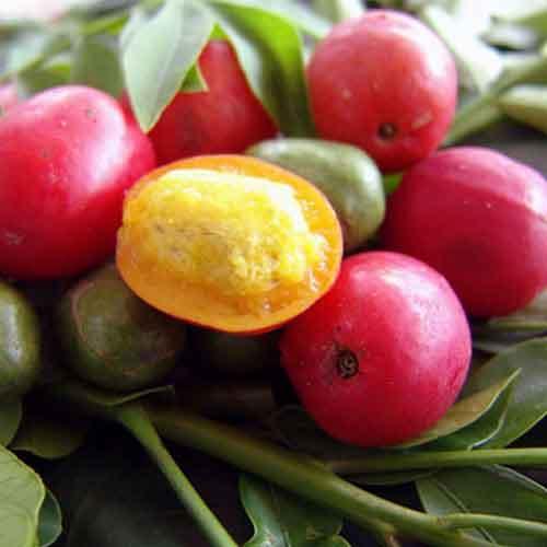 Fleurs,....fruit,.....tout ce qui se mange,...se boit....ou qui vient de la nature.......... Jocote11