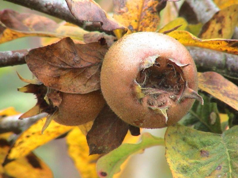 Fleurs,....fruit,.....tout ce qui se mange,...se boit....ou qui vient de la nature.......... - Page 4 W_081010