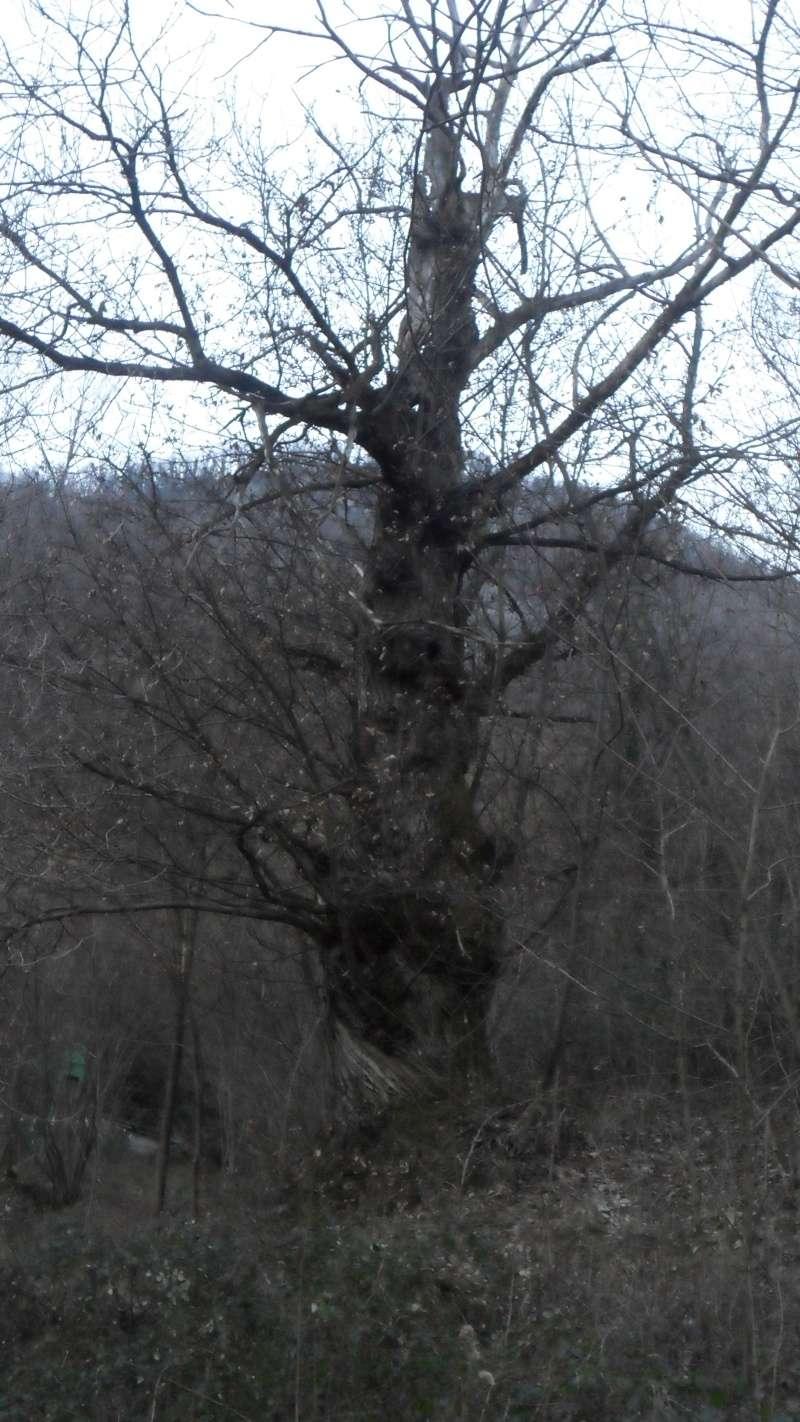 La natura all'opera Sam_2311