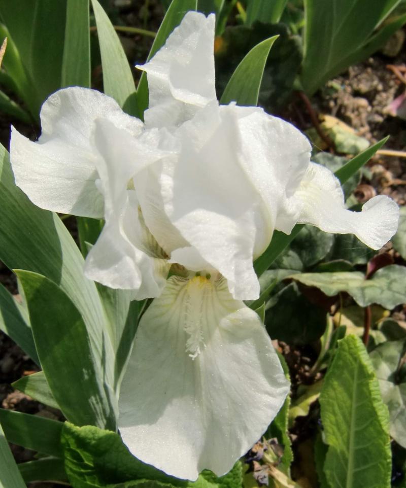 un nouveau blanc  Lilli-11