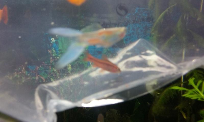 Besoin d'aide pour identifier mes poissons ! Image_10