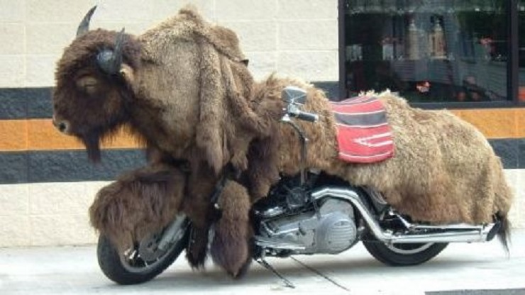 les Bécanes délirantes, bizarres ou situations insolites Buffal10