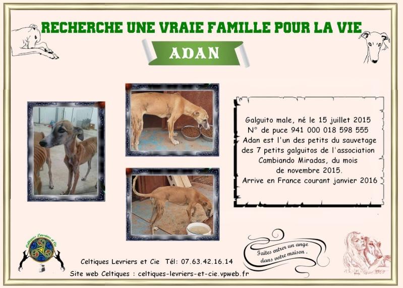 Adan - galguito  Adan11
