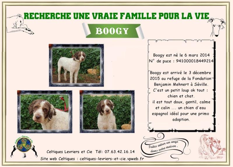 Boggy - chien d'eau Espagnol - 2 ans - Adopté Boogy10