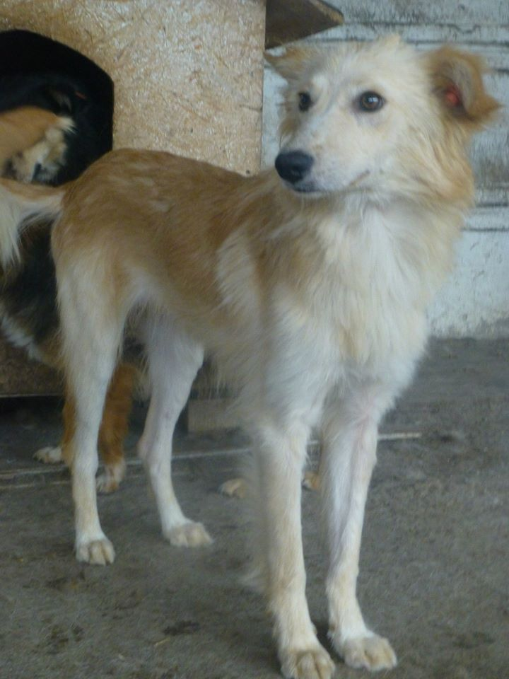 CARLY, F-X, née ~ 2013, taille moyenne (TAMARA/FOURRIERE) -Prise en charge Asso Pattes & Tic 11896210