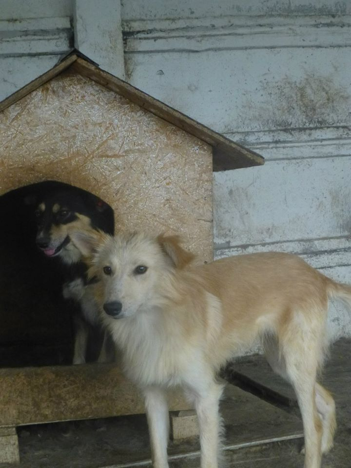 CARLY, F-X, née ~ 2013, taille moyenne (TAMARA/FOURRIERE) -Prise en charge Asso Pattes & Tic 11954610