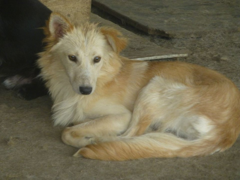 CARLY, F-X, née ~ 2013, taille moyenne (TAMARA/FOURRIERE) -Prise en charge Asso Pattes & Tic 11960210