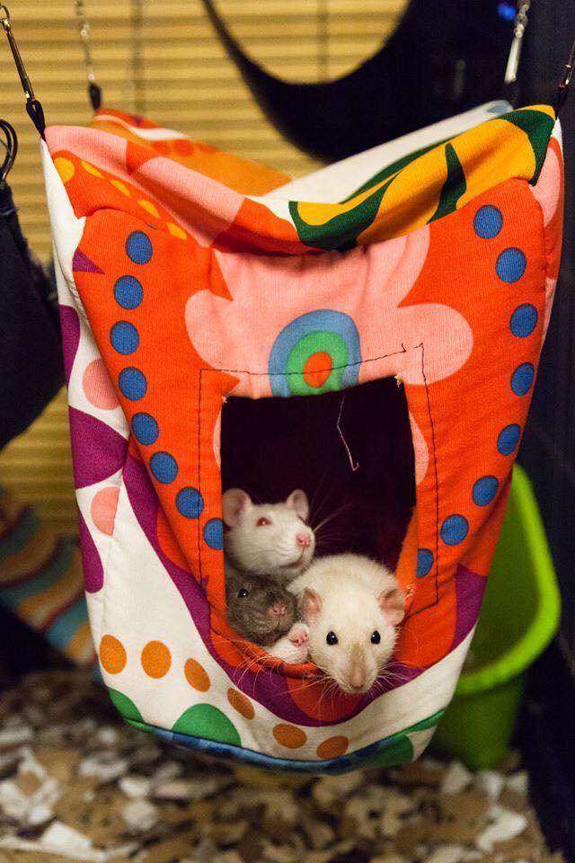 Suivi des petites Surprises de Nanny McPhee (pour les adoptants) - Page 2 11986310