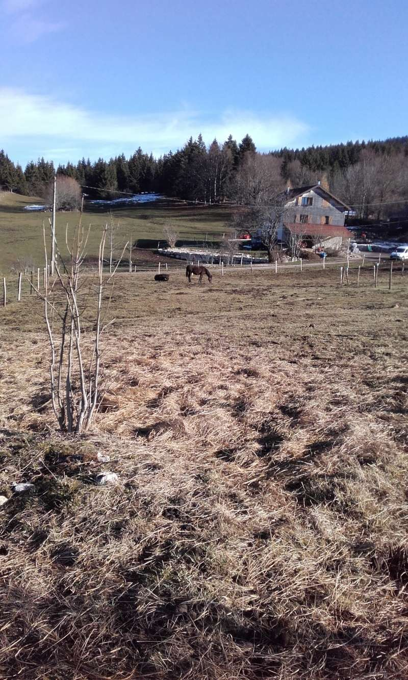 HAVANE - OI poney  née en 1995 - adoptée en mars 2014 par dona carlota - Page 2 20151210