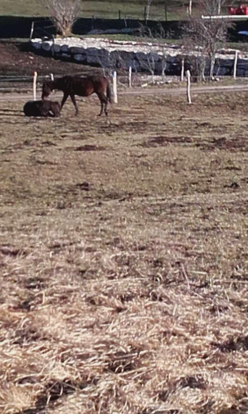 HAVANE - OI poney  née en 1995 - adoptée en mars 2014 par dona carlota - Page 2 20151211