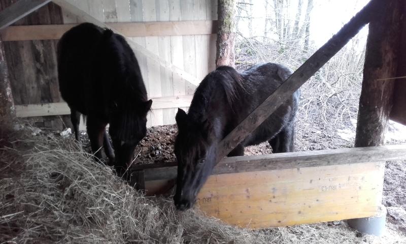 HAVANE - OI poney  née en 1995 - adoptée en mars 2014 par dona carlota - Page 2 20160111