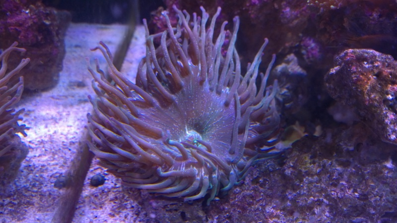 Merow reef  - Page 5 Wp_20120