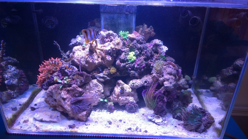 Merow reef  - Page 6 Wp_20126