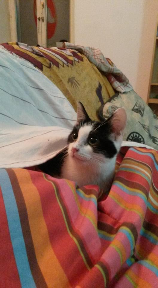 Livy, femelle, 10.05.2015, noir et blanche Livy10