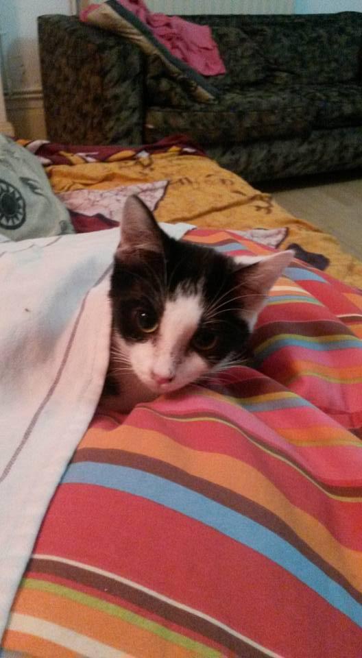 Livy, femelle, 10.05.2015, noir et blanche Livy110