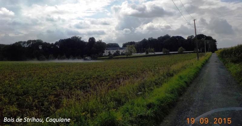 CR du 19/9/15: du Hainaut au Brabant flamand Dscn2180