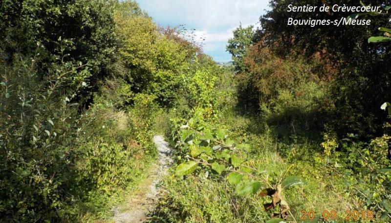CR du 20/9/15: 146 km pour voir la banlieue de Dinant autrement Dscn2224