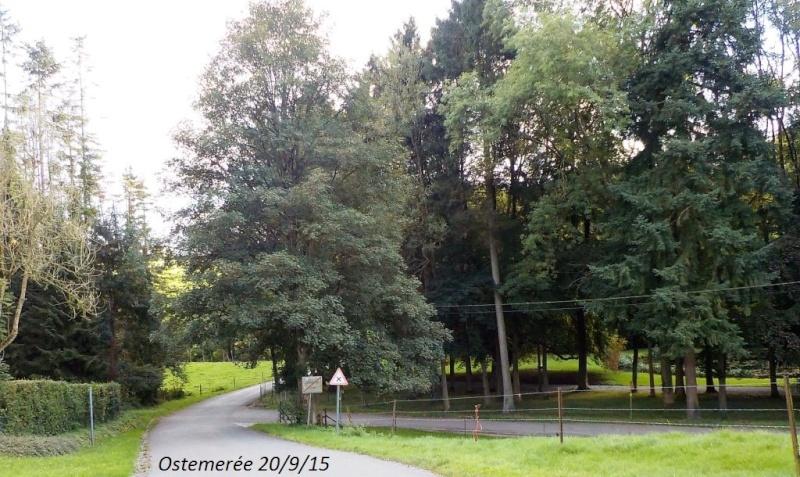 CR du 20/9/15: 146 km pour voir la banlieue de Dinant autrement Dscn2260