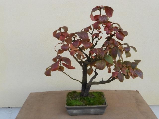 I colori dell'autunno Dscn6312