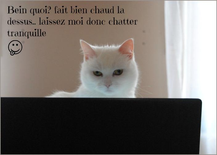 PRINCESSE, chatte née en 2010 env. (CARMINA) En FA chez Yas.h (Belgique) - Page 2 Dsc_0230
