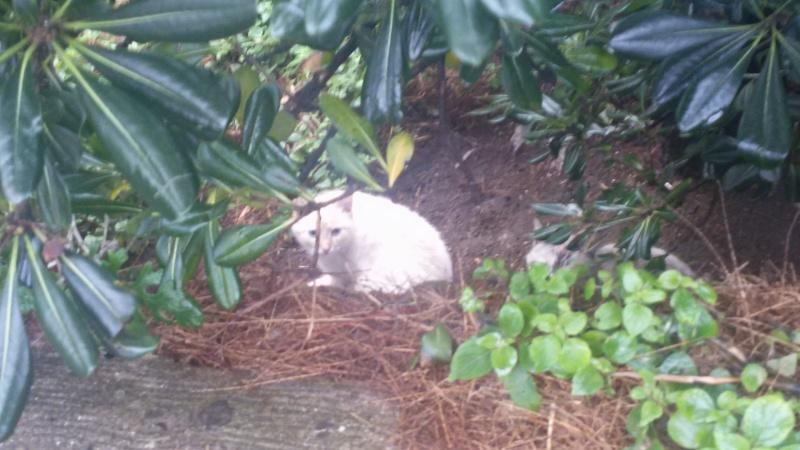 Recherche solution pour famille de chats siamoisés à la rue (Biarritz) Image29