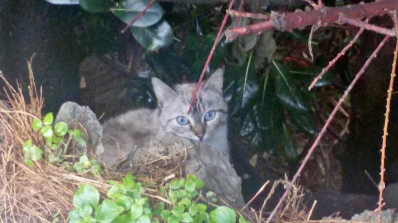 Recherche solution pour famille de chats siamoisés à la rue (Biarritz) Image34
