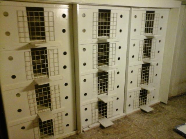 renovation de mes cases d'elevage 20151220