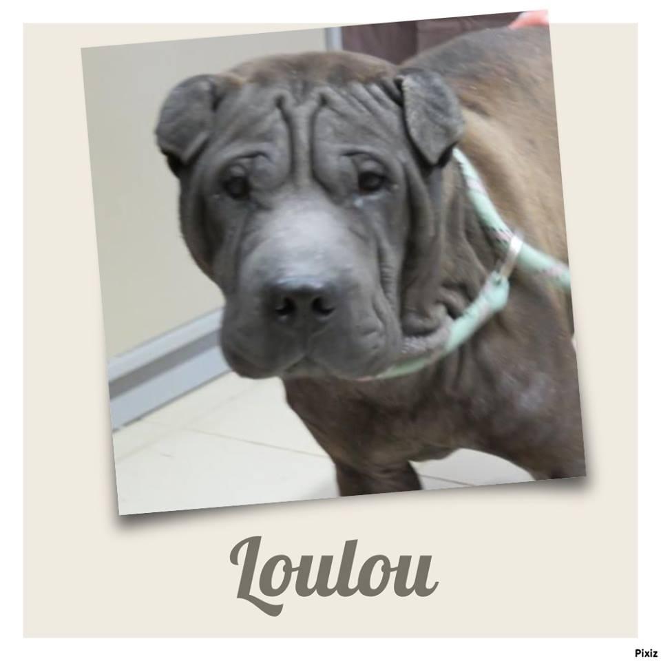 Loulou 3 ans 1/2 (62 ) Refuge de Tilloy Les Mofflaines  29512710