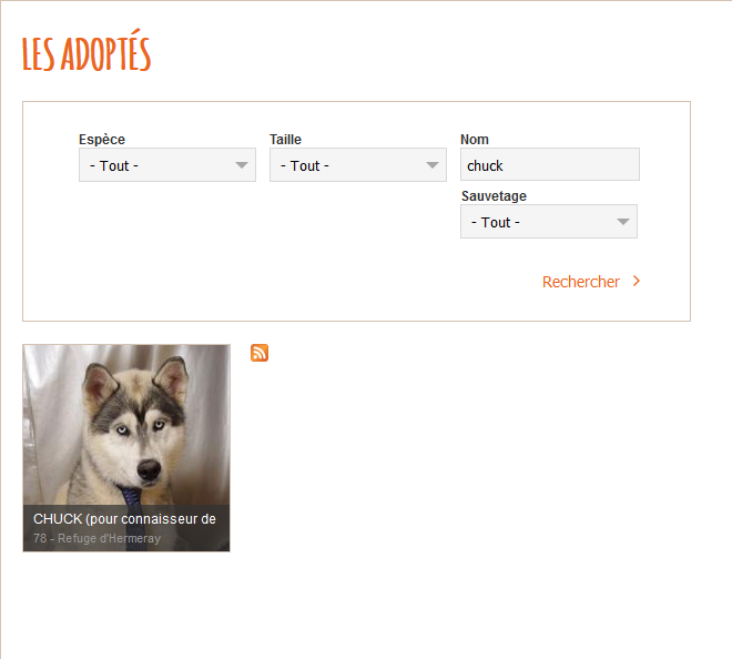 Chuck husky de 1 an et demi REFU78 Adopt10