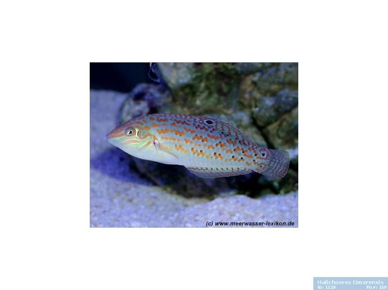 Le nouveau Reef d'Alexpilon, 600l custom - Page 39 159_gz10