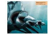 La passeggiata degli squali - Lunedì 4 gennaio 2016, dalle ore 19:45 alle ore 20:30 Im310