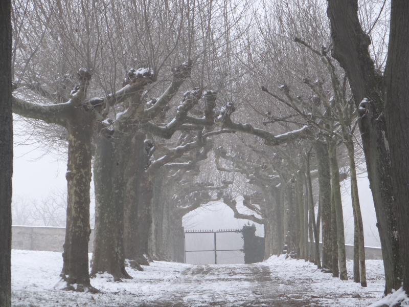 balade hivernale.  Dsc01312