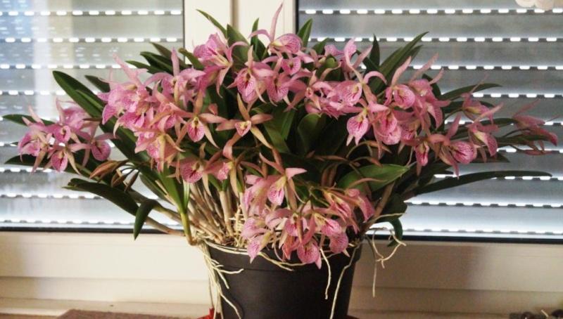 Orchideen - Seite 103 00311