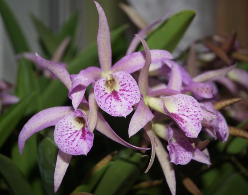 Orchideen - Seite 102 01210