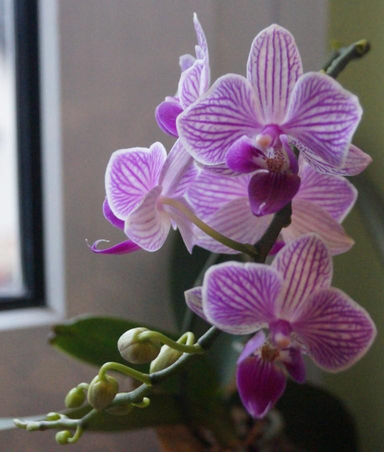 Orchideen - Seite 102 01710