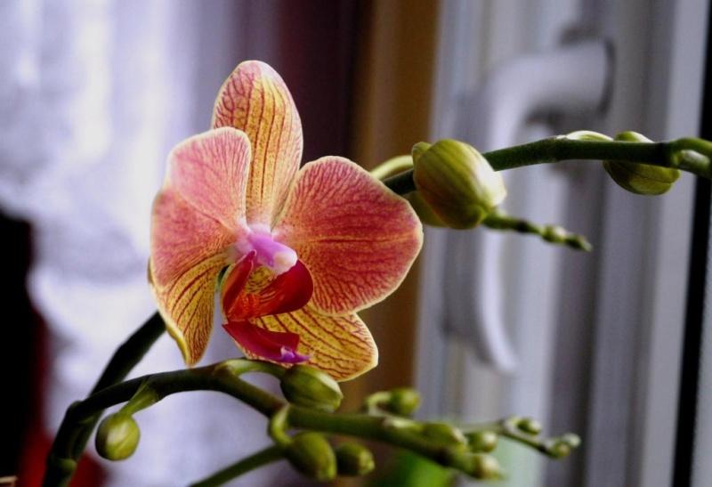 Orchideen 2 (fortlaufende Seiten 200 bis 300) - Seite 6 Dsc08615