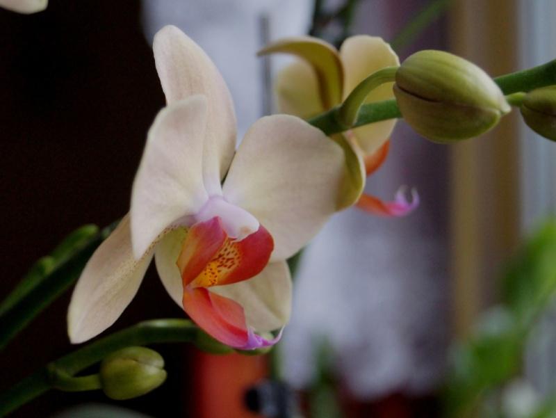 Orchideen 2 (fortlaufende Seiten 200 bis 300) - Seite 6 Dsc08616