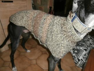vente de pulls pour aider Scooby France Pa130617