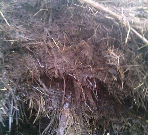 Stajsko gnojivo 14198110