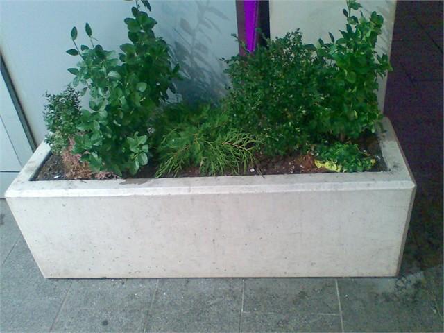 Vrtne biljke                        1_imag10