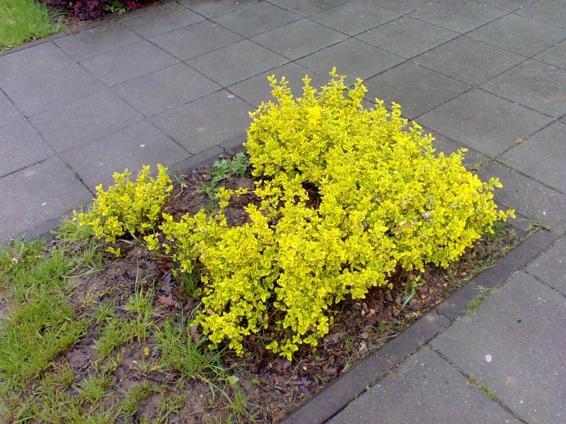 Vrtne biljke                        Image021