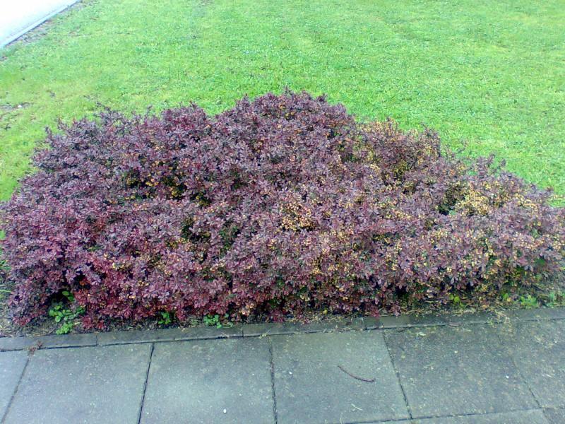 Vrtne biljke                        Image022