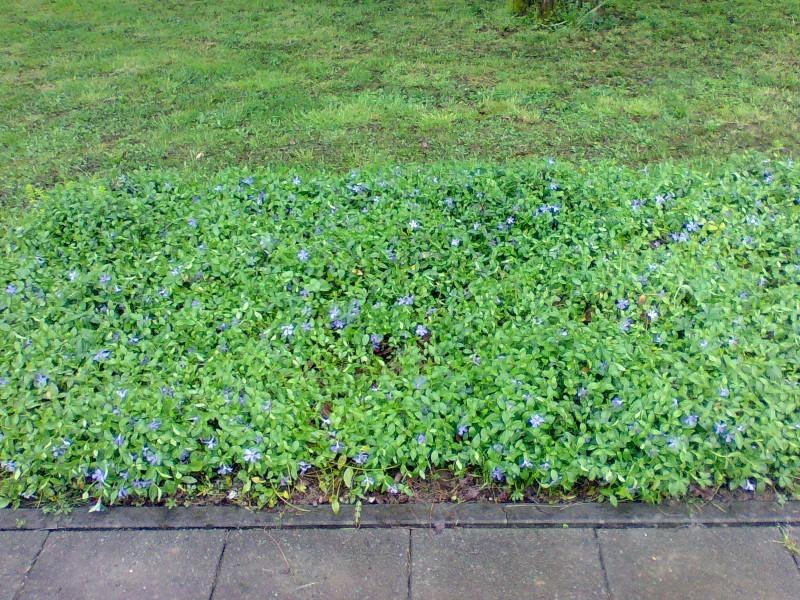 Vrtne biljke                        Image023