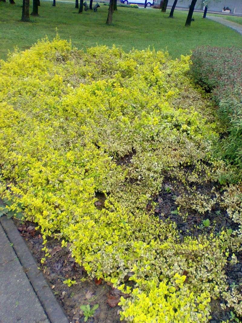 Vrtne biljke                        Image024